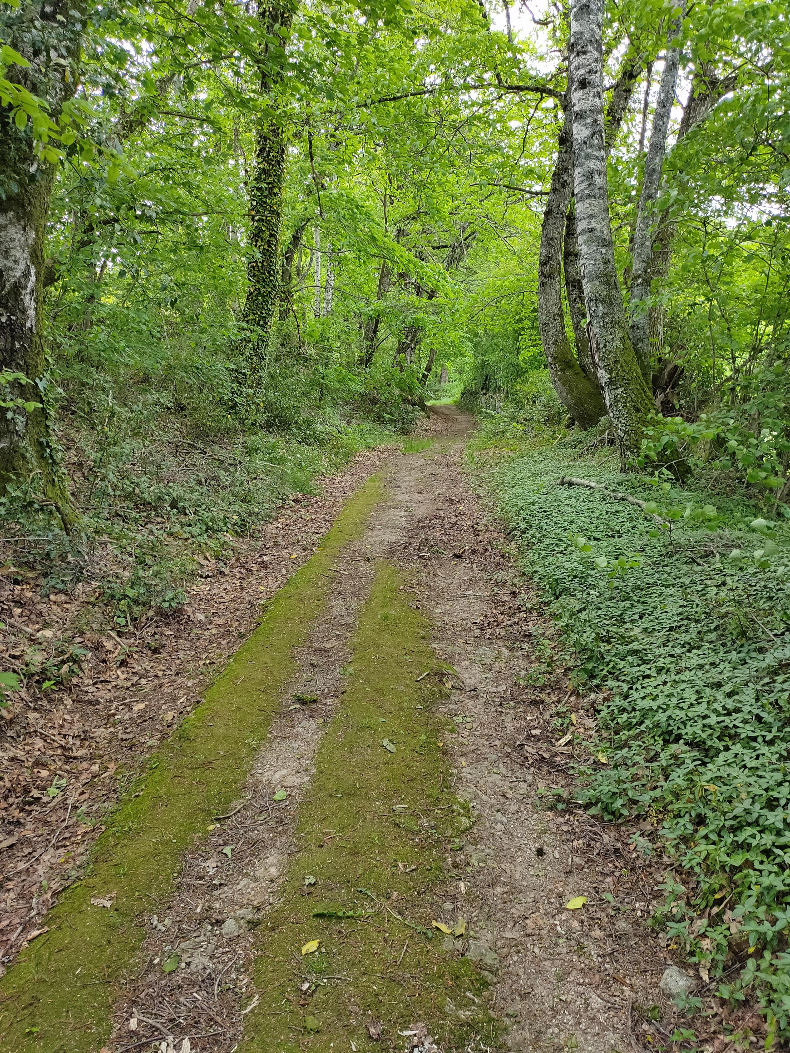 Chemin de randonnées à 50 m. du gîte